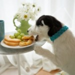 Diet disaster for UK pets, says PDSA