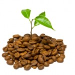 Move Over, Tea, it's Coffee's Turn to 'Go Green'