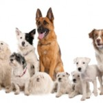 Recognising The Signs Of Arthritis In The Family Dog