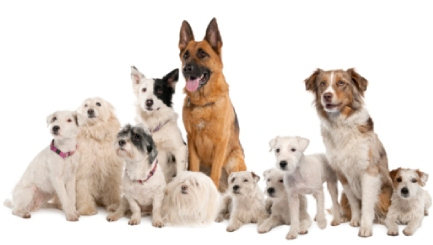 What are the Top Dogs for Family-Friendliness