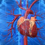 Heart Failure Could Be Tackled By Calcium Sponge