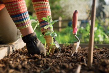Five Great Ways to do The Gardening Without Pain